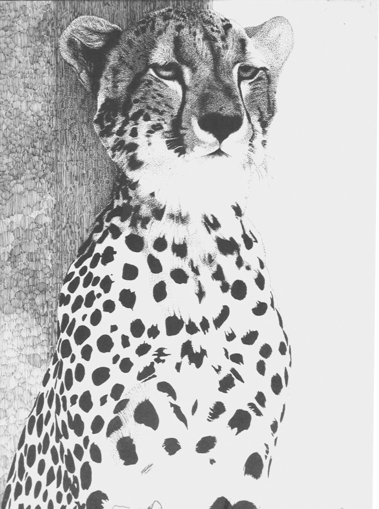 cheetah portrait pen and ink drawing
