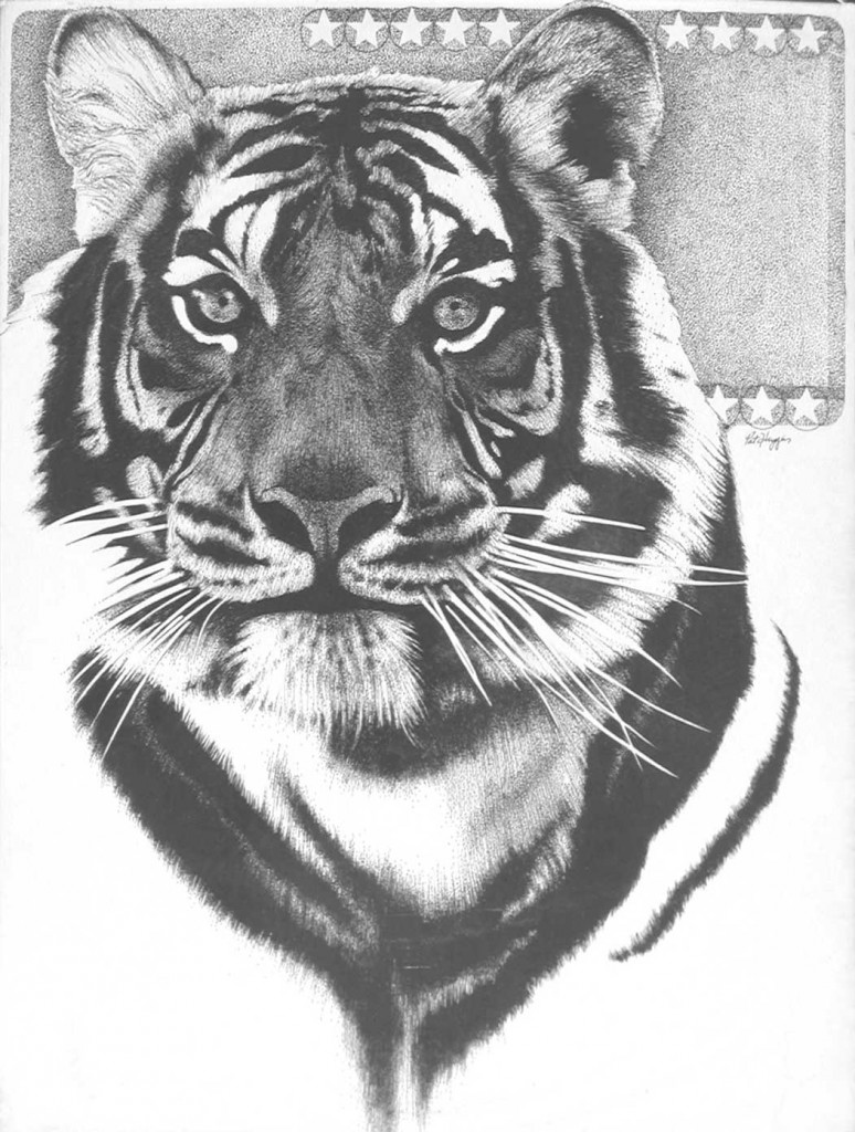 tiger portait, black and white rapidograph pen drawing on illustration board