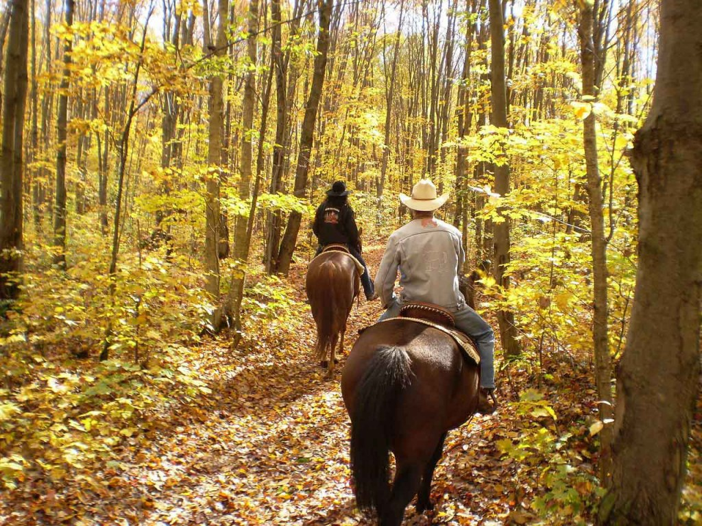 Equestrian wine tour through the fall woods